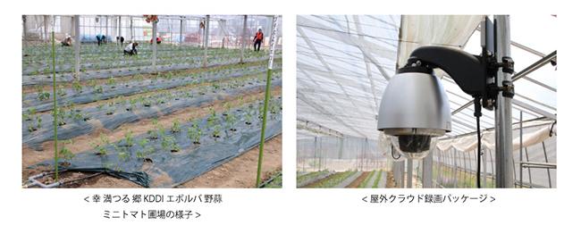 KDDIが東松島市の農作物栽培拠点に農業IoT「ゼロアグリ」を導入 写真